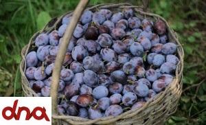 frutta_08-300x182