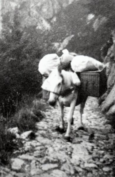 Il mulo, carico degli approvvigionamenti per i villeggianti, prosegue la scalata - © Archivio Danilo Battisti