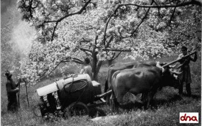 L'agricoltura negli anni '60