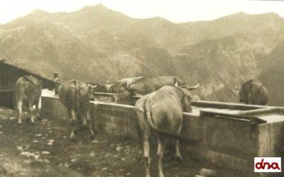 L'allevamento negli anni '60